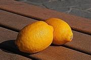 レモン【地植え】写真