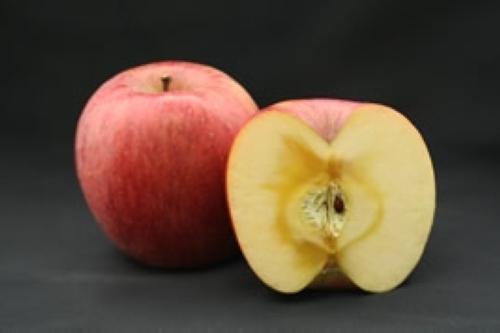 りんご【地植え】写真